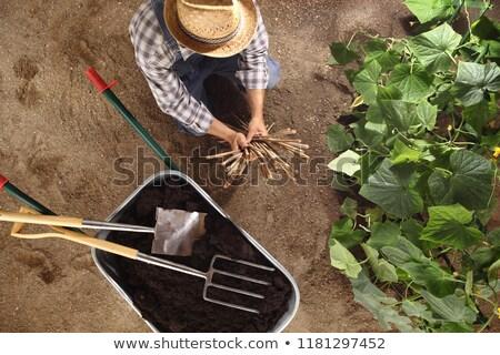 Carrinho de mão completo solo jardim primavera trabalhar Foto stock © Nobilior