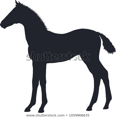 Stock photo: Black foal and horse