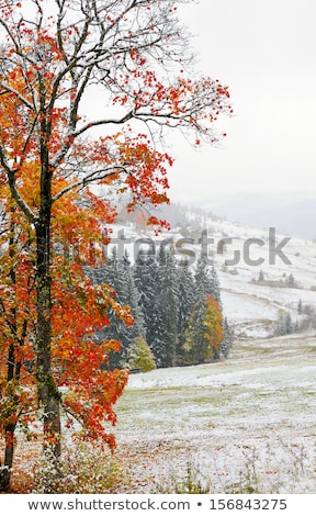 első · hó · vidéki · út · kicsi · kavicsút · fedett - stock fotó © Mps197