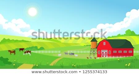 Colorful farm summer landscape, blue clear sky with sun, red barn Stock photo © MarySan