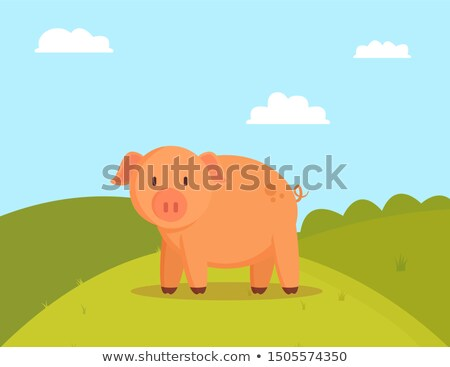Pig on Green Glade, Image of Fatty Domestic Pet Stock photo © robuart
