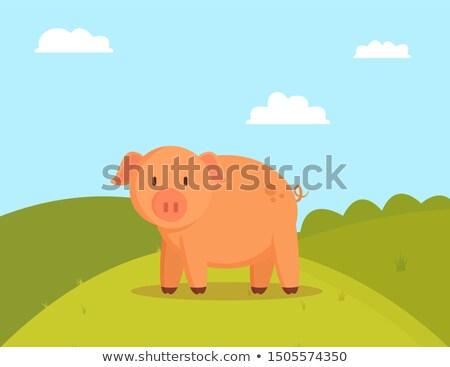 Porco verde clareira imagem gorduroso doméstico Foto stock © robuart