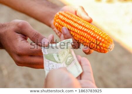 agricola · soia · soldi · mani · agricoltore - foto d'archivio © simazoran
