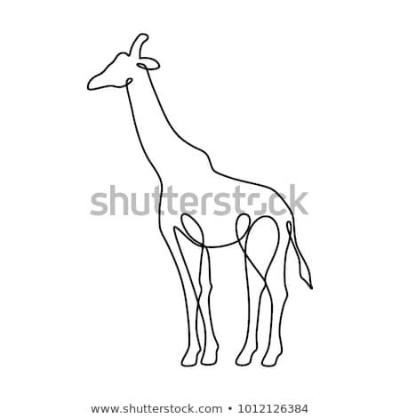 жираф · линия · рисунок · изображение · черный · белый - Сток-фото © cteconsulting