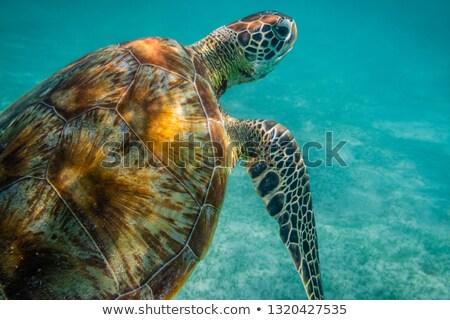 Tenger teknős akvárium hal természet kék Stock fotó © galitskaya