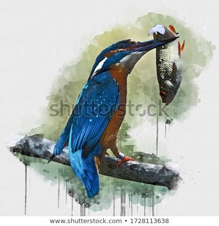 Vogel eten vis stuk rivier Stockfoto © fxegs