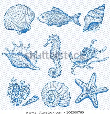 sea shells and fishes at beach stock photo © ankarb