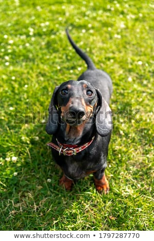 cute · cachorro · pequeño · cola · naturaleza · diseno - foto stock © Norberthos