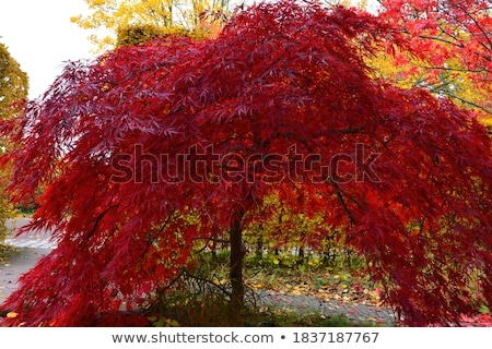 bordo · árvore · folhas · para · cima · quintal · terreno - foto stock © stevanovicigor