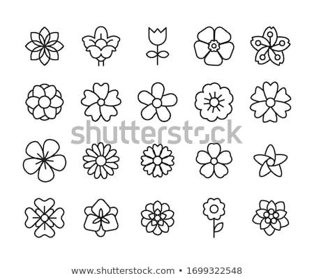Kwiat piktogramy dekoracyjny elementy Zdjęcia stock © derocz