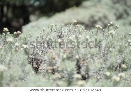 Blumenwiese - flower meadow 05 Stock photo © LianeM