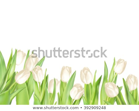abstrakten · Grunge · Tulpen · floral · rot · Natur - stock foto © beholdereye