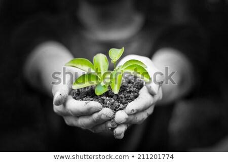 女性 · 手 · 小さな · 工場 · 土壌 · 生態学 - ストックフォト © yatsenko