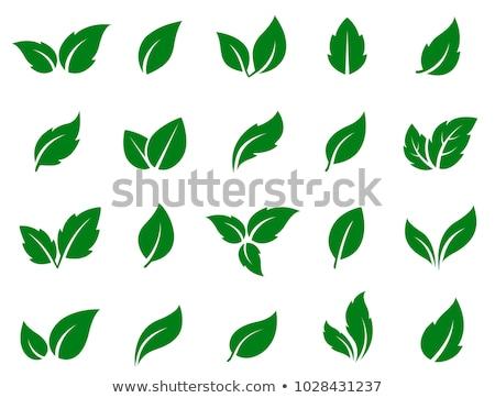 Vegetarisch eten geïsoleerd groene logo bladeren Stockfoto © robuart