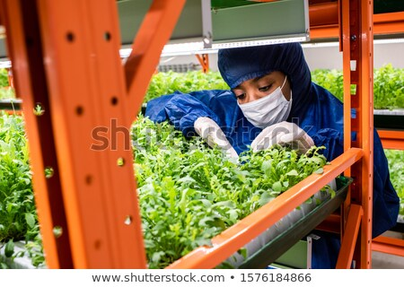 Young African researcher in coveralls, mask and gloves selecting green seedlings Stock photo © pressmaster