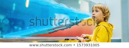 Boy in science class. The child is engaged in science BANNER, LONG FORMAT Stock photo © galitskaya