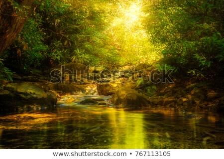 Nap streamelés fák erdő fa erdő Stock fotó © Paha_L