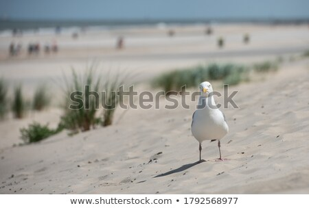 seagull close up stock photo © latent
