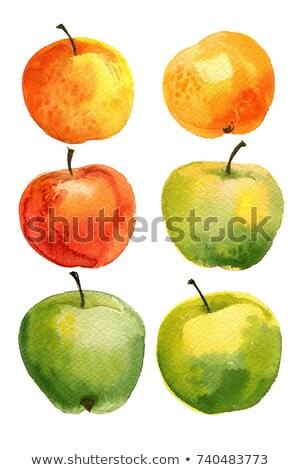 яблоко · эскиз · ручной · работы · белый · Рисунок · иллюстрация - Сток-фото © ankarb