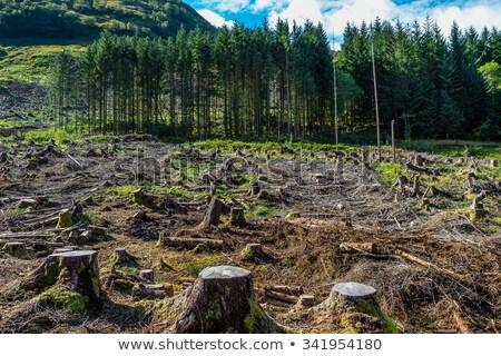 ツリー 森林 春 緑 木材 太陽 ストックフォト © eltoro69