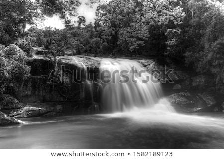 川 森林 滝 hdr 春 葉 ストックフォト © hanusst