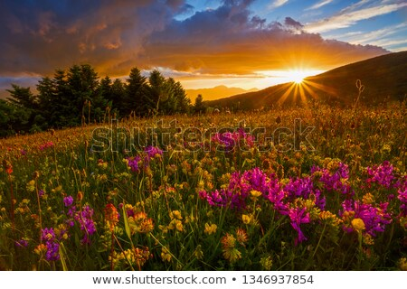 Hegy tájkép virágos legelő völgy park Stock fotó © MiroNovak