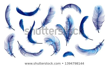 Stockfoto: Blauw · vogels · veren · vector · textuur · abstract