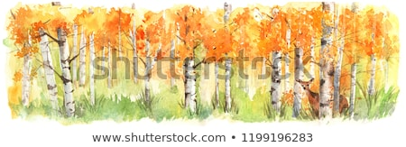 береза дерево акварель цифровой Живопись белый Сток-фото © saddako2