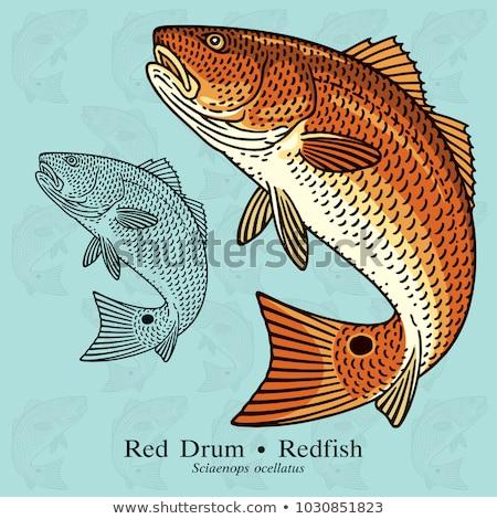 赤 魚 描いた 白 青 サンゴ ストックフォト © blackmoon979