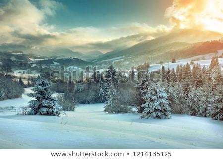 Kış manzara beyaz kar boş gökyüzü Stok fotoğraf © fotoduki