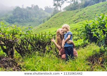 Mother and son are traveling on a tea plantation in Malaysia. Traveling with children concept Stock photo © galitskaya