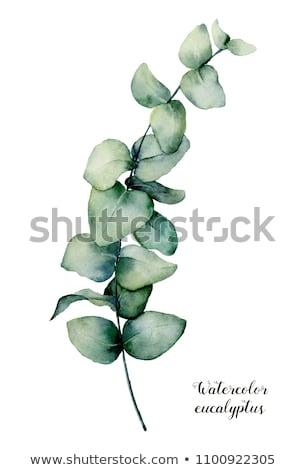 水彩画 · 現代 · 装飾的な · 緑色の葉 · 花輪 - ストックフォト © bonnie_cocos