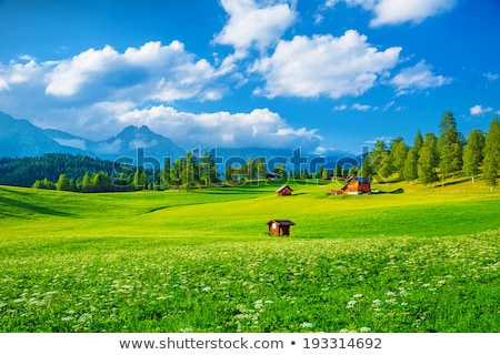 Pasture Grass Field In Austrian Alps Stock photo © AndreyPopov