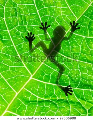 Kikker verborgen bladeren tropische natuur blad Stockfoto © smithore