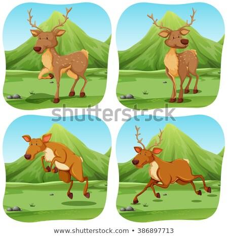 Deers in four different scenes Stock photo © bluering