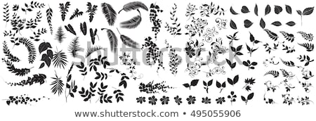 Foto stock: Azul · preto · folhas · isolado · branco · negócio