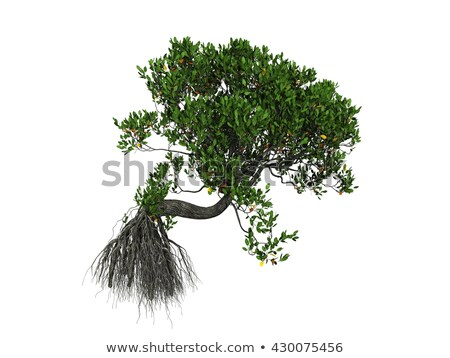 Mangrove tree in white Caribbean sea Stock photo © lunamarina