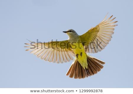 Occidentale uccello nido pulcini Foto d'archivio © devon