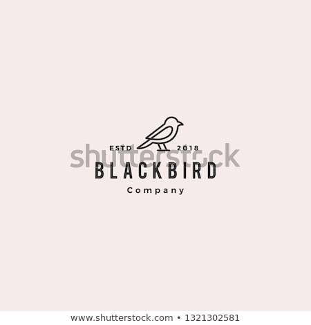 Sólyom madár logo felirat szimbólum alkotóelem Stock fotó © blaskorizov