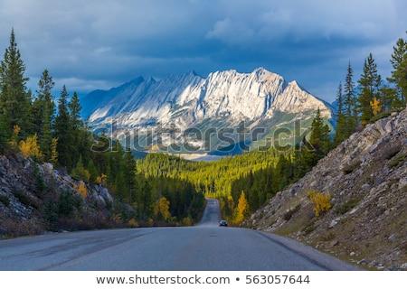 Road in Jasper National Park in Canada Stock photo © benkrut