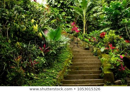 Stockfoto: Trap · tropische · tuin · stappen · leidend · huis