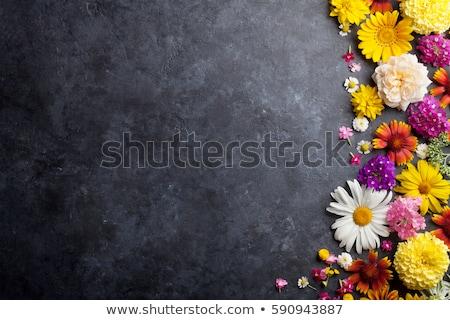 Camomila flores quadro verde floral cartão Foto stock © karandaev
