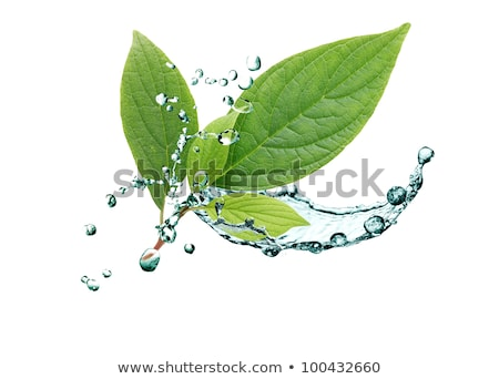 Green Leaf And Water Motion Stock fotó © cosma