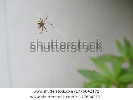 bahçe · örümcek · doğa · web · mavi · hayvan - stok fotoğraf © feedough