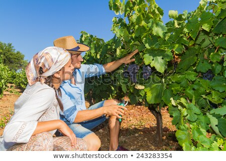 female wine producer  cropping grapes Stock photo © photography33