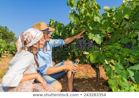 Női bor gyártó szőlő nő zöld Stock fotó © photography33
