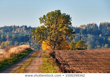 Boom blauwe hemel mooie landschap blad Stockfoto © Discovod