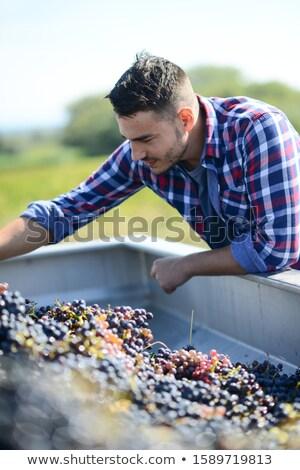 Winegrower working with grape harvesting machine Stock photo © Kzenon