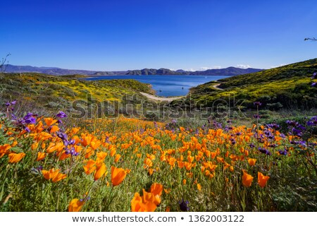 Lake Side Flowers Stock photo © rghenry