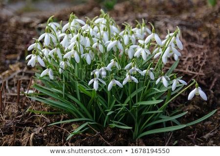 Stock fotó: Kert · virágok · virág · tavasz · idő